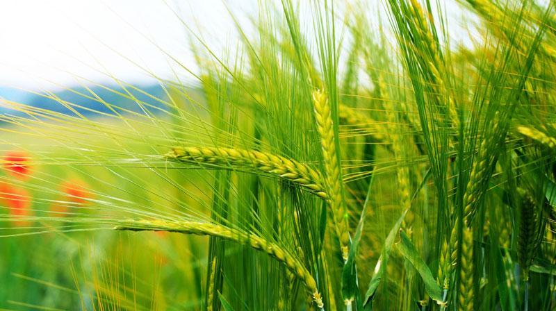 Saudi Arabia, UAE to invest in India's food processing industries