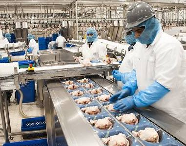 Almarai's poultry ops widen Q1 losses to SAR 104.3 mln