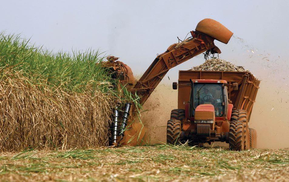 77da60449 هذه قائمة أكبر دول العالم إنتاجا لقصب السكر